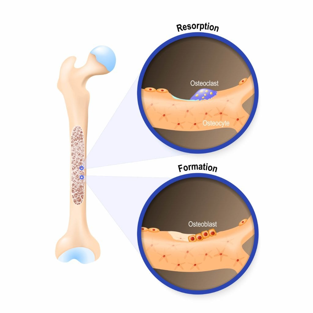 Diagram showing bone resorption and formation
